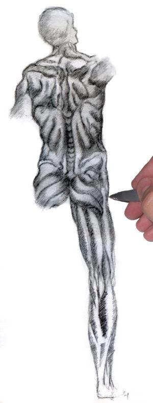 Maendernesmuskler